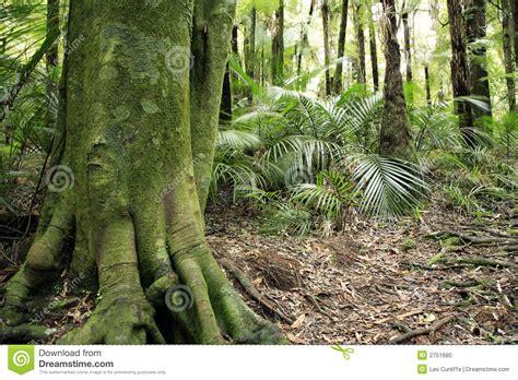 tropical tree stock photo image