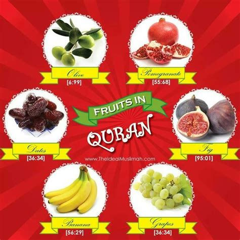 3 fruits mentioned in quran 157 best islaam images on islamic quotes