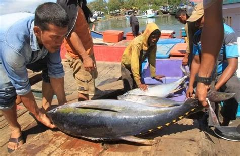 Harga Merkuri Per Kilo harga ikan tuna segar indonesia 2018 rejeki nomplok