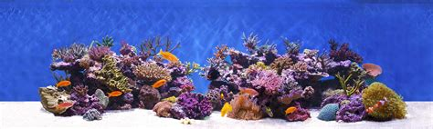 Rock Live live rock arc reef live rock aquacultured direct from