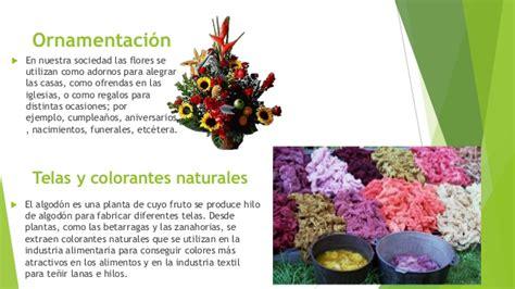 Usos De Las Plantas Tipos De Colorantes Que Existen
