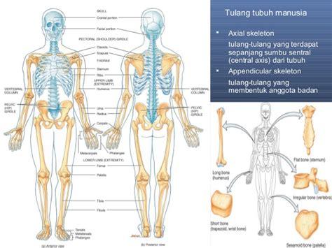 Kerangka Manusia anatomi