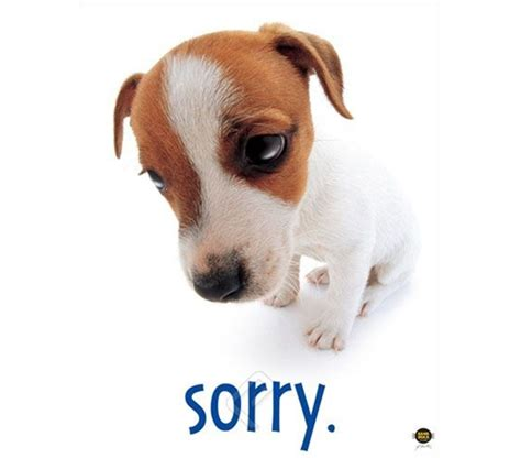 sorry puppy quot sorry quot college room poster college room decorating poster shows guilty