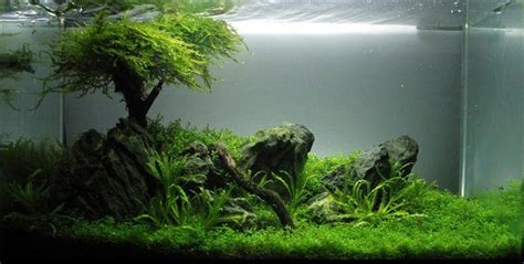 Aquascape Tree by