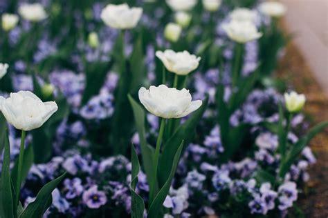 flora und botanischer garten köln flora und botanischer garten k 246 ln botanic garden in