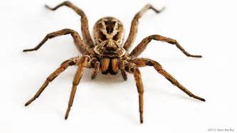 image nation image gorgeous wolf spider