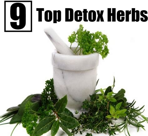 Best Detox Remedies by Top 9 Detox Herbs Diy Home Remedies Kitchen Remedies