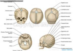 Go back gt gallery for gt anatomy of the anterior and posterior aspects