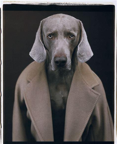william wegman dogs landlordrocknyc the new york landlordrocknyc