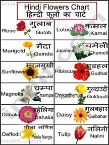 list of flowers hindi flowers chart learn hindi pinterest flower