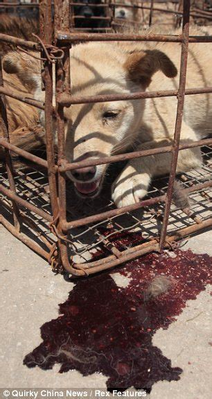 kill   dogs  china  produce food pets