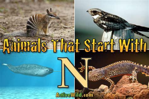 animals  start   list  amazing animals