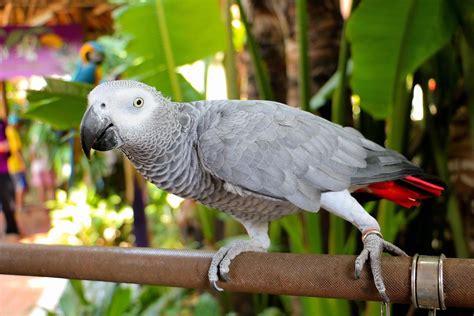top five talking bird species