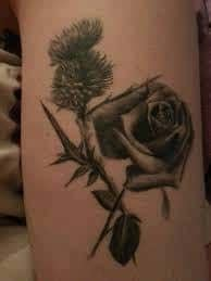 black rose tattoo albuquerque thistle meaning 45 ideas and designs
