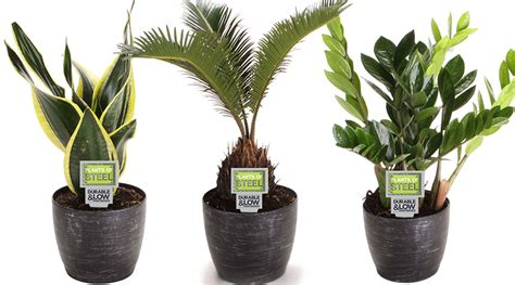 hawaiian house plants how to decorate with tropical house plants