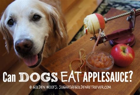 can dogs eat sugar make your own safe applesauce golden woofs