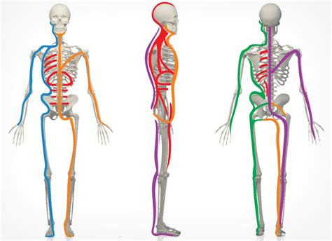 cadenas musculares philippe cignion pdf osteofisio clinica de fisioterapia y osteopat 237 a en madrid