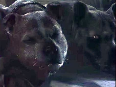 hagrid s dogs name how well do you remember hagrid s pets playbuzz