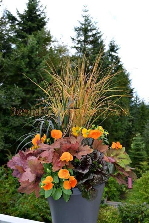 17 Best Fall Pansy Container Ideas Images On Pinterest Pansy Garden Ideas