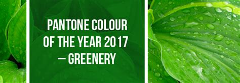pantone of the year 2017 pantone colour of the year 2017 greenery