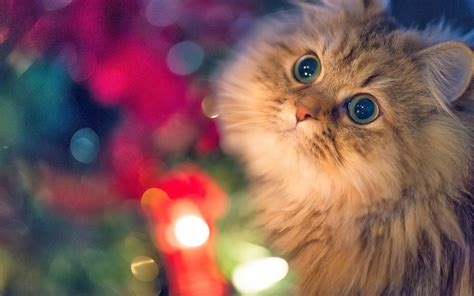 10 beautiful cats pictures cats wallpapers