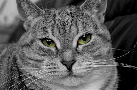 alimentazione gatto castrato alimentazione archivi pagina 4 di 5 cose di gatti