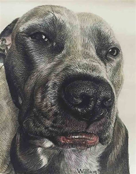 charcoal for dogs charcoal drawings charcoal portraits charcoal paintings