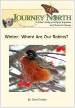 american robins jn for kids
