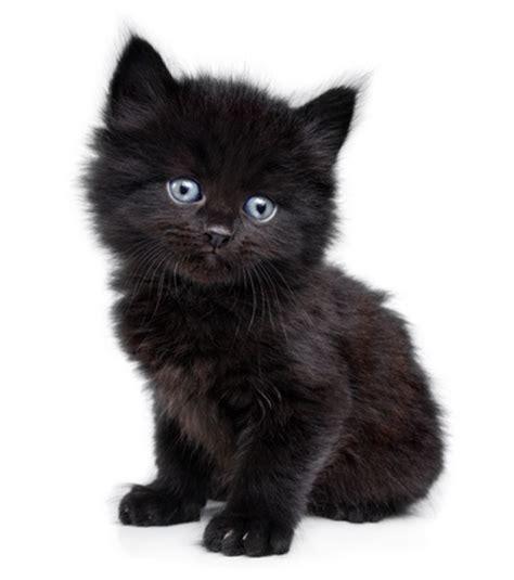 black cats  good  selfies argos pet insurance