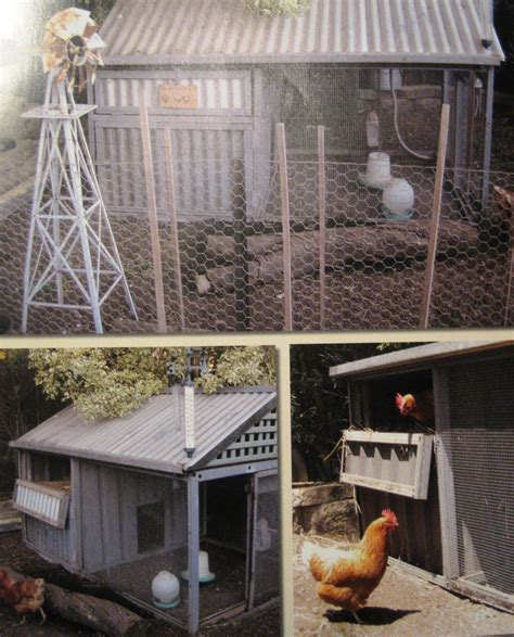backyard chickens sydney backyard chickens sydney raising chickens australian