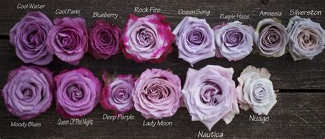types of purple color study of lavender and purple roses by harvest roses