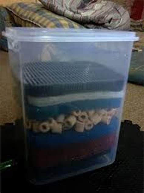17 best images about keeping fish on aquarium