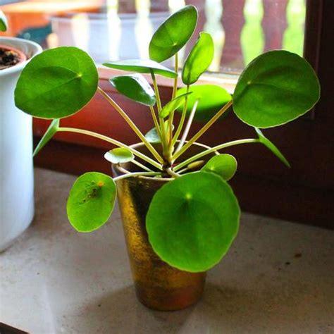 Plantes Appartement Sombre by Une Plante Sans Lumi 232 Re C Est Possible Ooreka