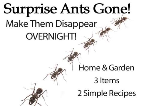 How To Make Ants Disappear Overnight I Tiny Ants In My Kitchen