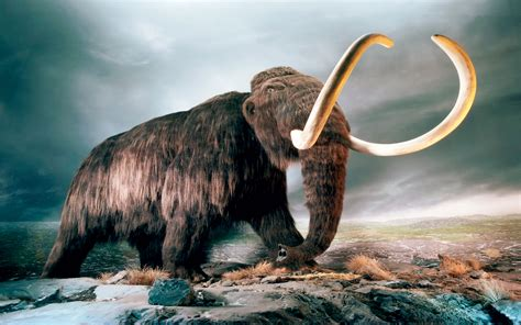 mammut world  animals    hd wallpaper