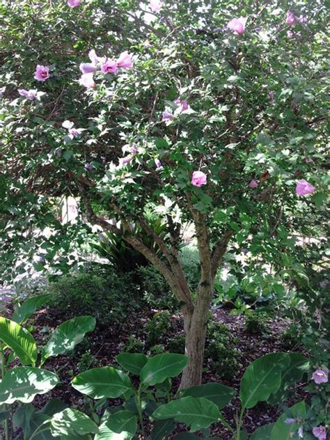 partial sun flowering shrubs 17 best images about partial shade plants zone 8 on