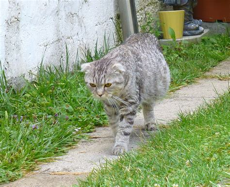 how much does it cost to euthanize a cat euthanasia cost how to euthanize a cat and the reality of doing it at home