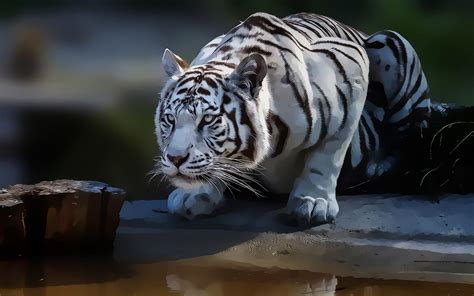 Kaos 3d White Tiger white tiger wallpapers hd wallpaper cave