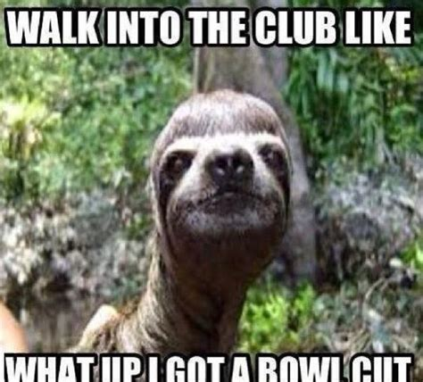 Sloth Meme - the best sloth memes