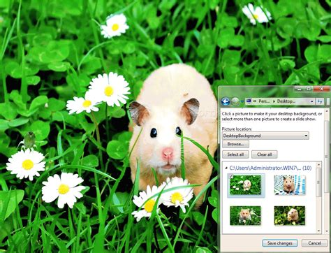 themes for windows 7 cute cute hamsters windows 7 theme download