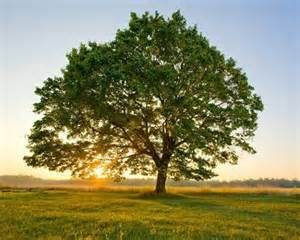 A Tree - join greenpop s treevolution donate a tree and help me to