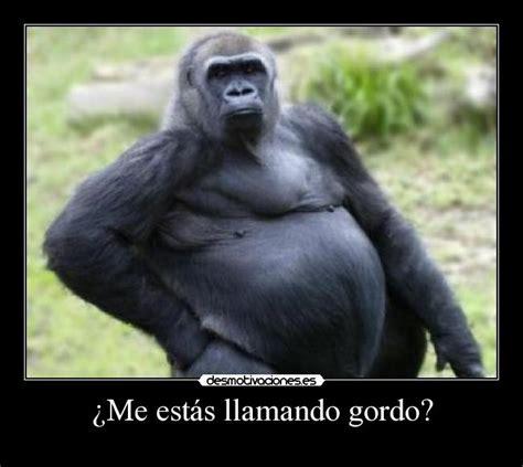 an 233 cdotas de m imagenes de memes de monos chistes y an 233 cdotas de
