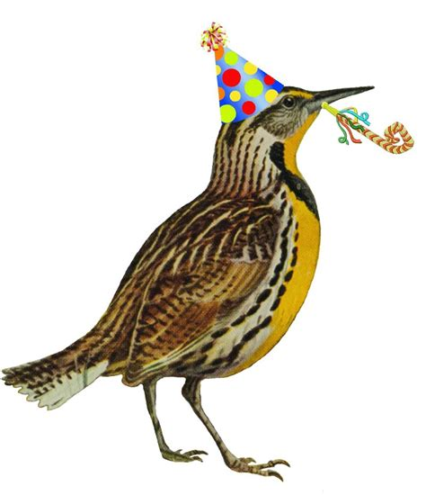 happy birthday bird images birthday bird