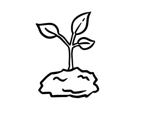 green sprout coloring page coloringcrew com