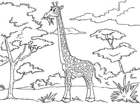 libro the giraffe that ate giraffe coloring pages coloringsuite com