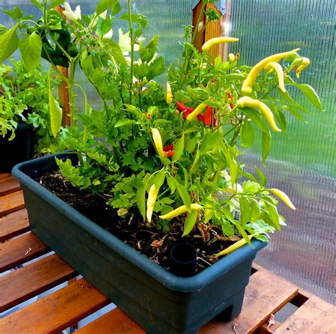 Essential Guide To Container Vegetable Gardening Grow Garden Vegetable Plants