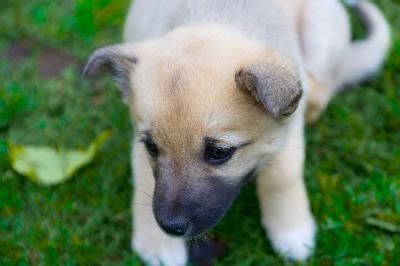 most effective way to potty a puppy best 25 potty dogs ideas on