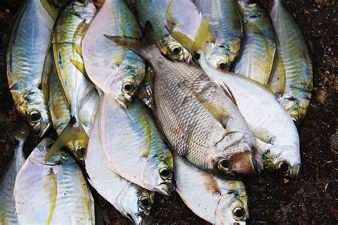 fresh fish house 10 reasons why you should not miss out on coste 241 o beach