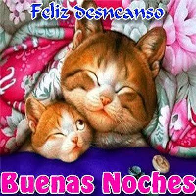 imagenes buenas noches con gatos feliz descanso buenas noches imagenes y carteles