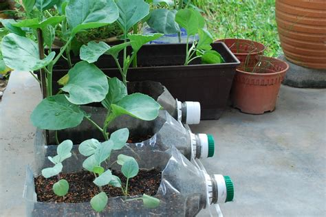 my vegetable garden a glimpse at container gardening - Plastic Containers For Gardening